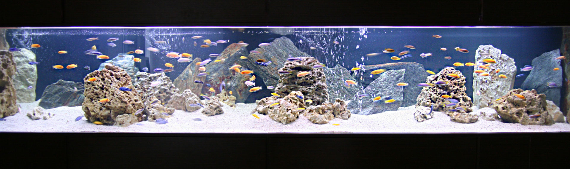ZAKAQUA-akwaria
